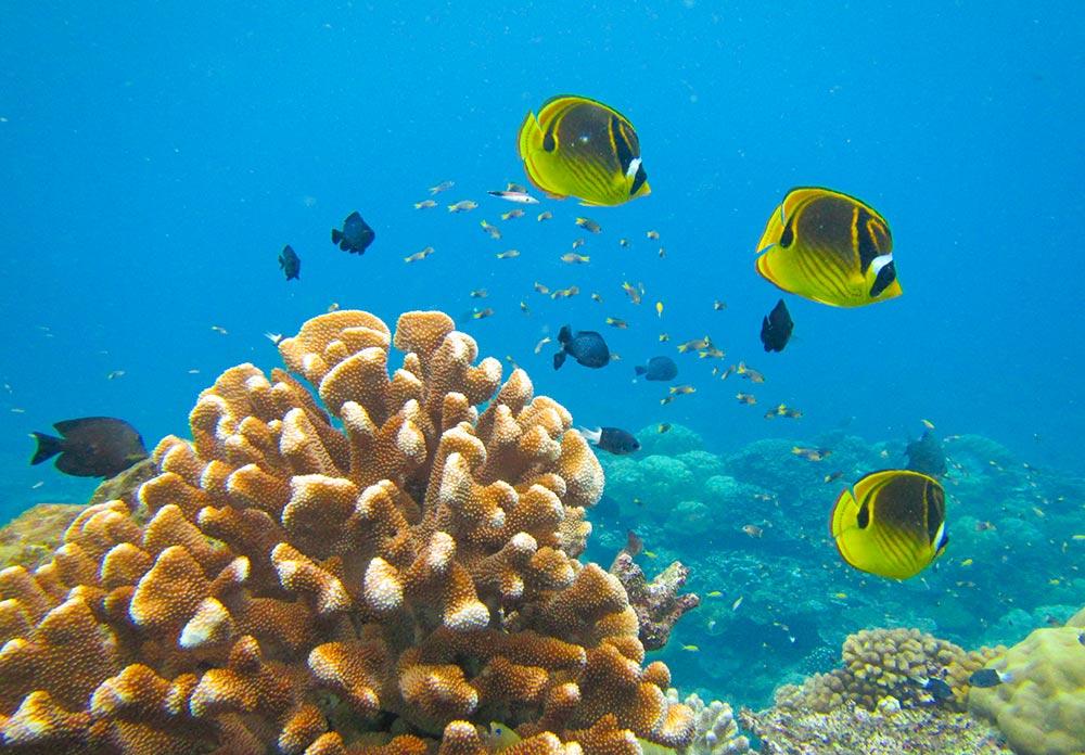 Diving holiday Australia - Christmas Island