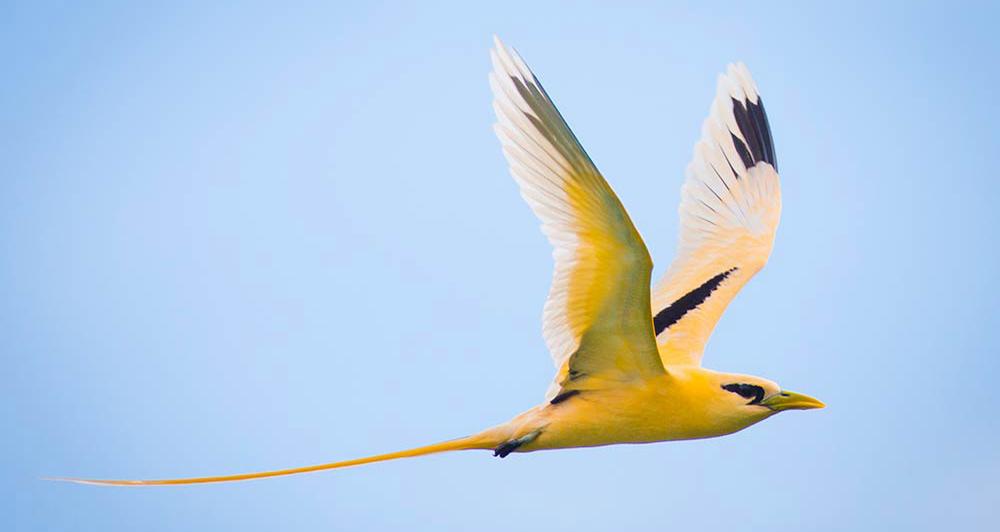 Birdwatching Christmas Island Australia
