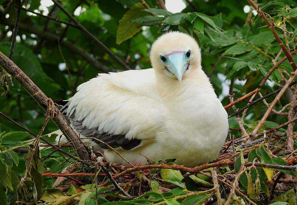 bird watching australia